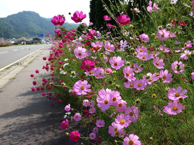 Blog_0016