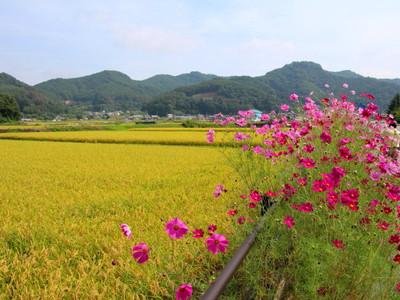 Blog_0062