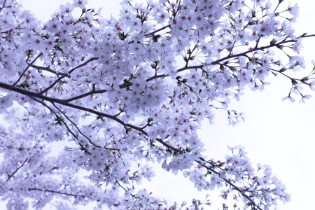 Blog_0241