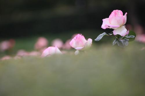 Blog_0025